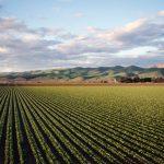 nawozenia pola